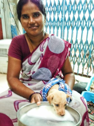Shoba feeding a puppy with milk.