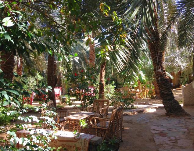 Garden in Siwa Oasis