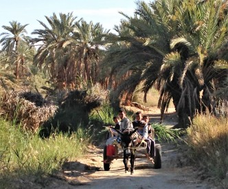 Kids on a donkey cart in palm groves of Siwa Oasis