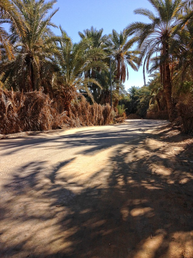 Walking the back roads in Siwa Oasis