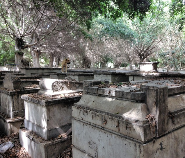 Rows of tombs at Alexandria's Jewish cemetery