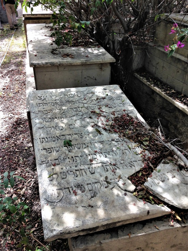 Broken tombstone in Alexandria's Jewish cemetery, covered in leaves, with inscription in Hebrew