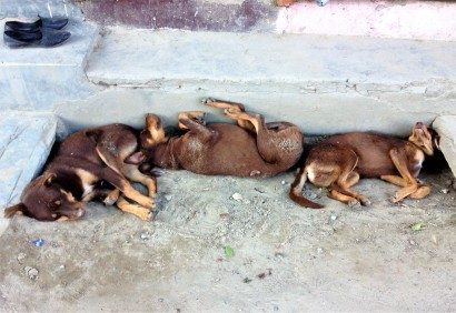 Sleeping_dogs