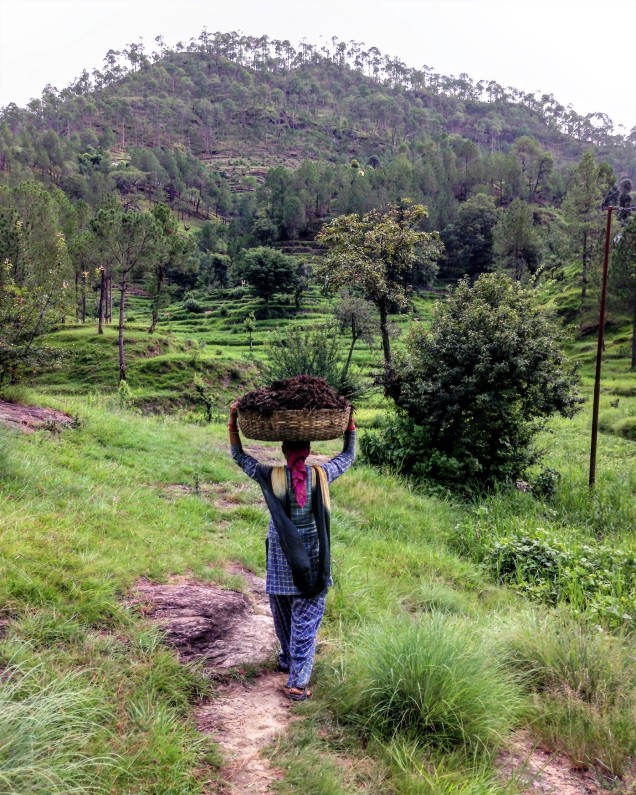 A lady carrying manure to the crop fields. Bintola, Almora, Uttarakhand