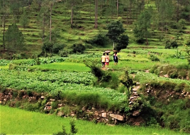 Carrying baskets of composted cow manure to terraced fields, Bintola valley, Almora, Uttarakhand