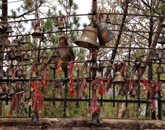 Monkey and bells at Chitai Golu Devta Temple, Almora, Uttarakhand