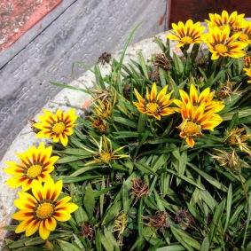Flowers at Ma Anandamayi Ashram, Patal Devi, Almora, Uttarakhand