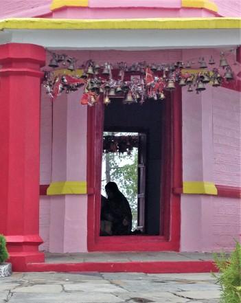 Worshipper in Kasar Devi temple, Kasar Devi, Almora, Uttarakhand