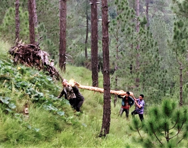 Carrying the log out of the forest, Papershali, Almora, Kumaon, Uttarakhand