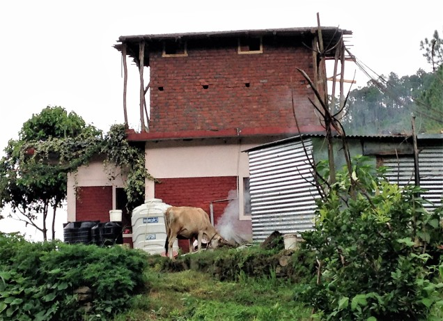 Photo of neighbor's house with new addition in progress and cow, Papershali, Almora, Kumaon, Uttarakhand