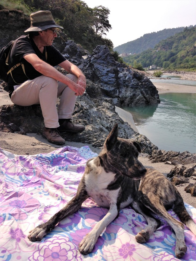 Dog steals beach blanket. Ganga River beach, Rishikesh, Uttarakhand