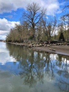 The clean water of the Willamette River reflects the clear blue, clean skies that are one of the effects of the coronavirus shutdown.